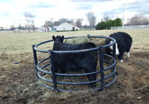 finding the right job heifer feeder