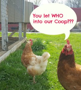 5 Lessons on Realizing Dreams Learned Blogging for a Year chicken and coop