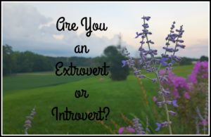 lavender are you extrovert or introvert