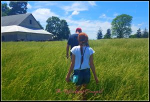 5 Lessons on Realizing Dreams Learned from Blogging for a year grass pasture