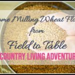 Home Milling Wheat Flour From Field to Table