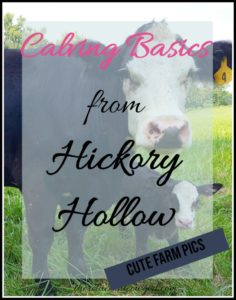Calving Season from Hickory Hollow