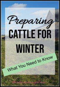 Make sure that your farm and livestock are prepared for winter! Here are several steps to preparing cattle for winter and making sure that your homestead is ready for the cold.
