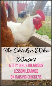 The Chicken Who Wasn't!
