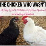 The Chicken Who Wasn't